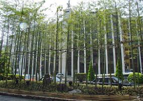 企業イメージに貢献する緑化対策